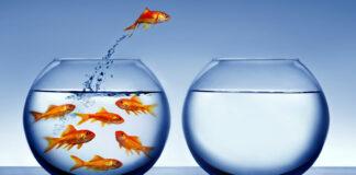 Veja neste artigo como criar uma Estratégia do Oceano Azul no e-commerce. O que é preciso para promover modificações no seu modelo de negócio de forma a criar um diferencial competitivo tão grande que transforme a sua concorrência em algo irrelevante.
